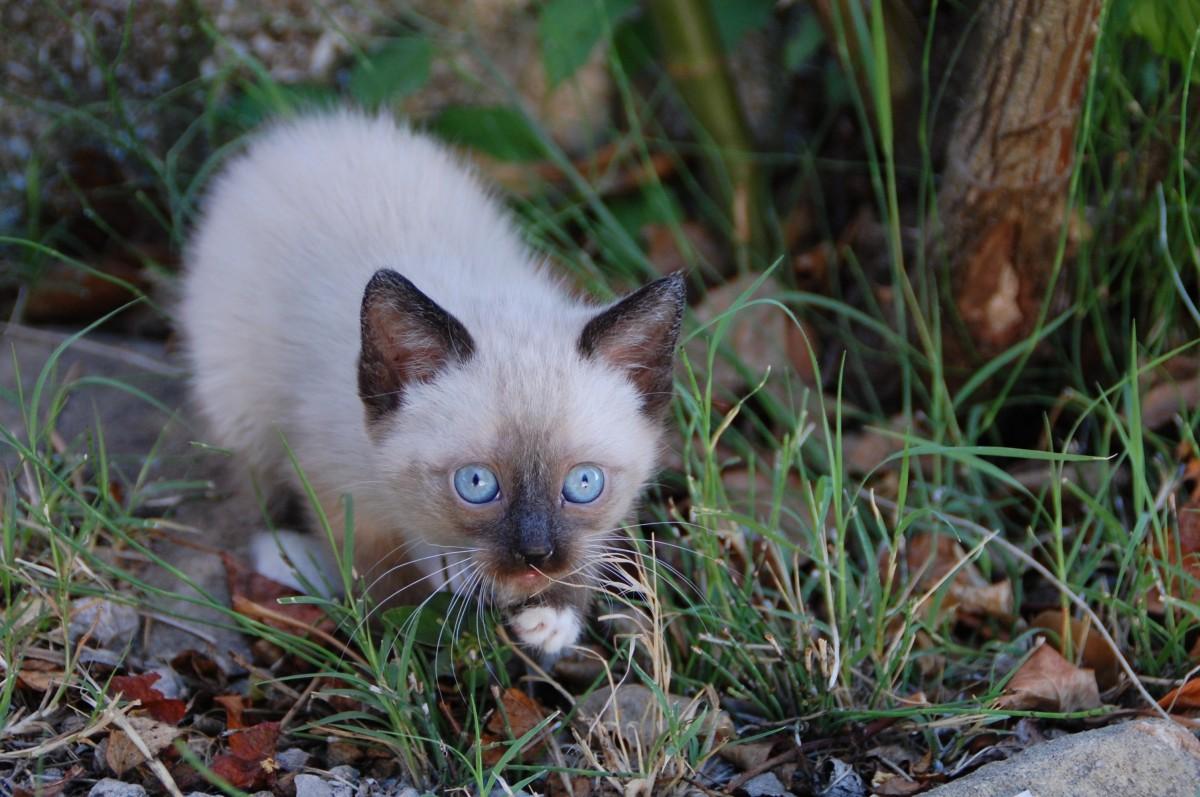 petit-chat